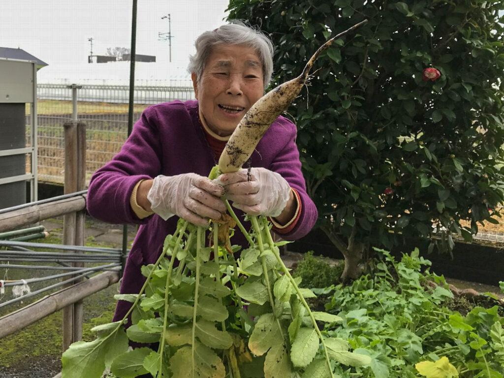 冬野菜を育てて味わう1